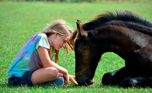 Красивые детские стихи про лошадку