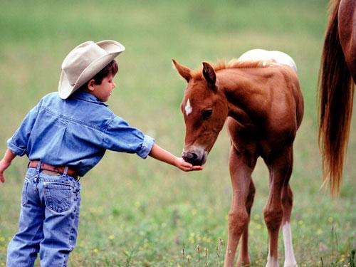 Загадки про лошадку с ответами для детей