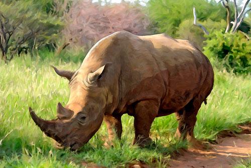 Загадки про носорога для детей 5-7 лет