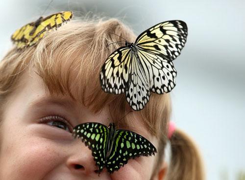 Загадки про бабочку для детей 5-7 лет