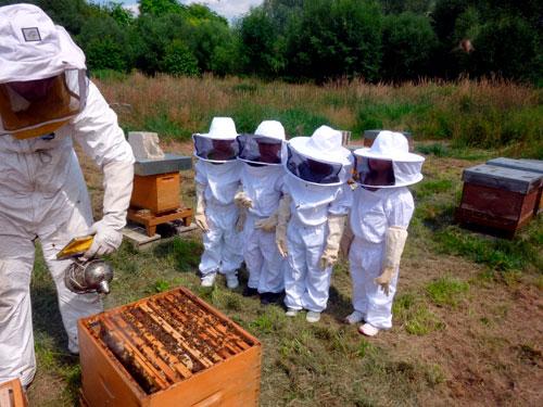Загадки про пчелу для детей 5-7 лет
