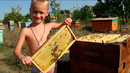 Интересные загадки про пчелу для детей