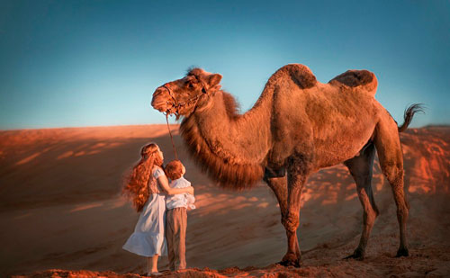 Загадки про верблюда с ответами для детей