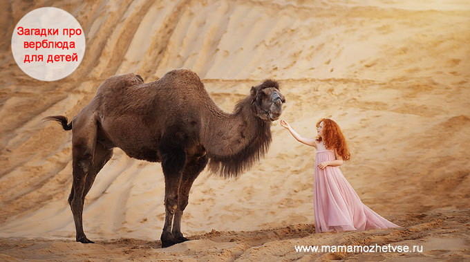 Загадки про верблюда для детей