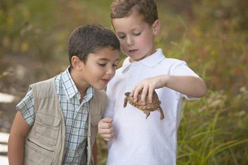 Загадки про черепаху с ответами для детей