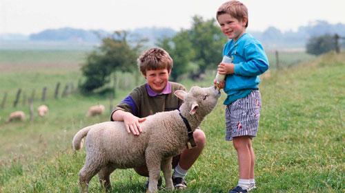 Загадки про барана с ответами для детей 5-7 лет