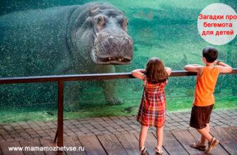 Загадки про бегемота для детей