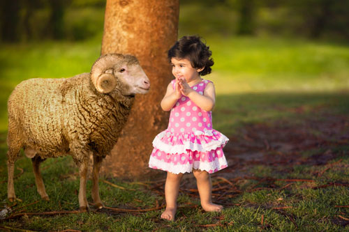 Загадки про барана с ответами для детей