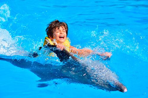 Загадки про дельфина с ответами для детей
