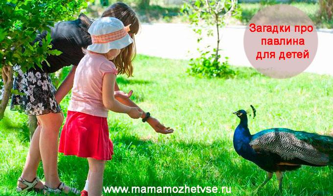 Загадки про павлина для детей