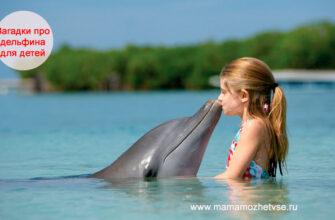 Загадки про дельфина для детей