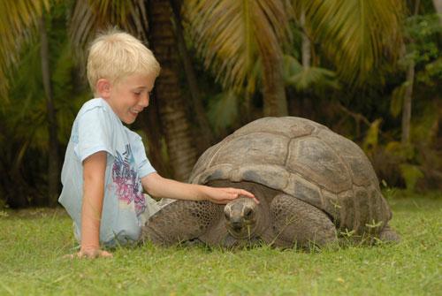 Загадки про черепаху с ответами для детей 5-7 лет