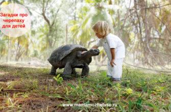 Загадки про черепаху для детей