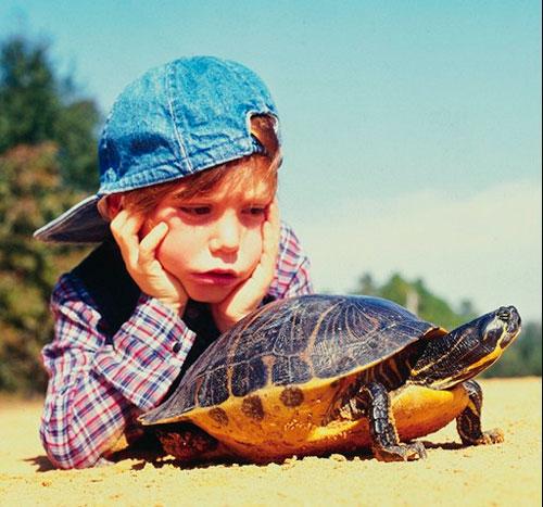 Загадки про черепаху с ответами для детей 7-9 лет