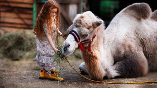Загадки про верблюда с ответами для детей 7-9 лет