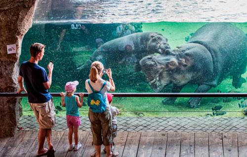 Интересные загадки про бегемота с ответами для детей 5-7 лет