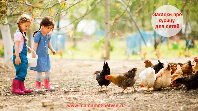 Загадки про курицу для детей