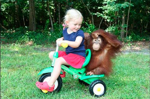 Загадки про обезьяну с ответами для детей