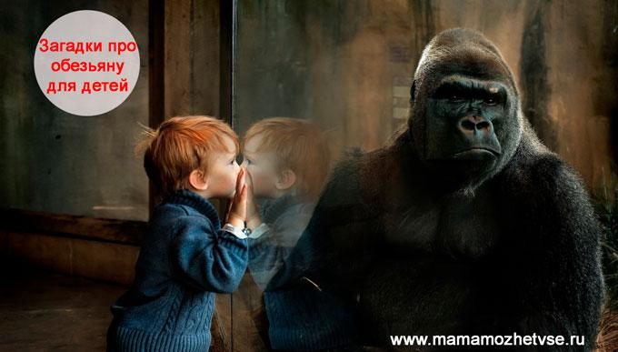 Загадки про обезьяну для детей