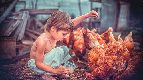 Загадки про курицу с ответами для детей 5-7 лет