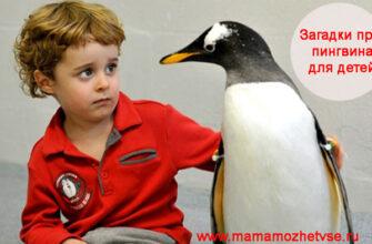 Загадки про пингвина для детей