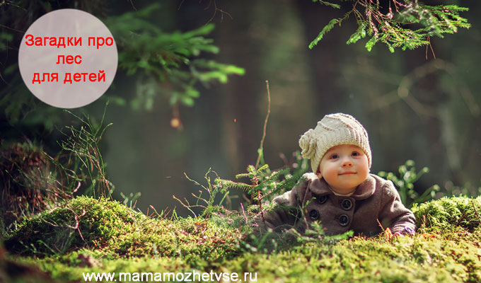 Загадки про лес для детей