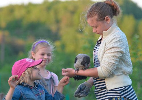 Загадки про ворону с ответами для детей