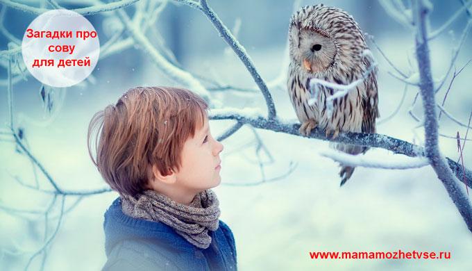 Загадки про сову для детей
