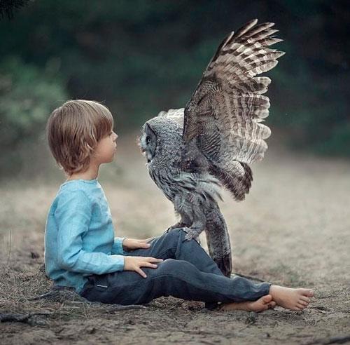 Загадки про сову с ответами