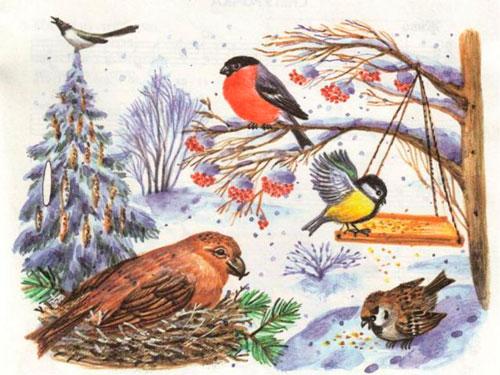 Загадки про зимующих птиц с ответами для детей