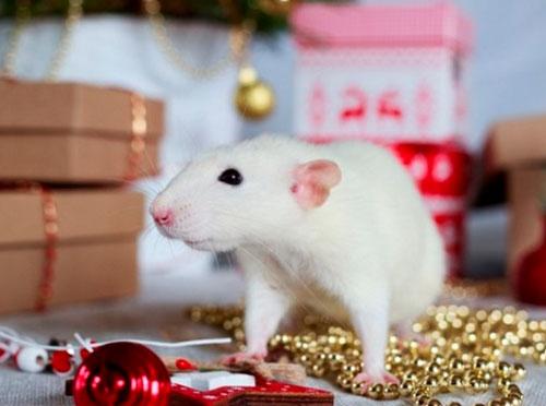 Интересные загадки про год крысы для детей