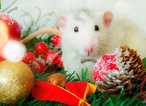 Интересные загадки про год крысы