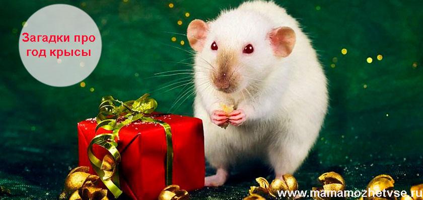 Загадки про год крысы