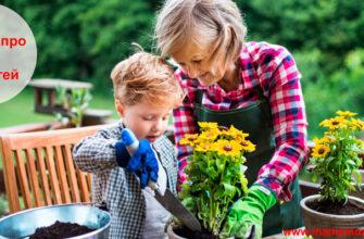 Загадки про сад для детей
