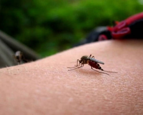 Что делать после укусов комаров у детей