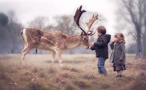 Загадки про оленя
