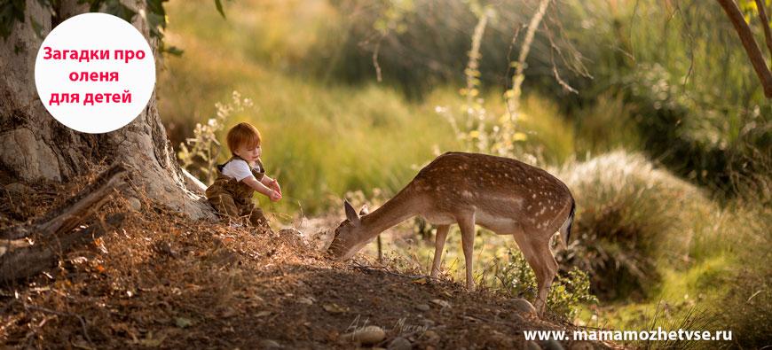 Загадки про оленя для детей