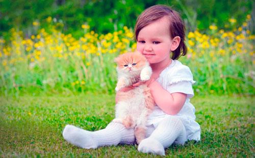 Загадки про котёнка для детей с ответами