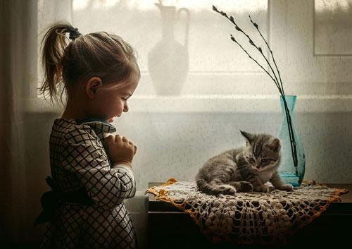 Загадки про котёнка