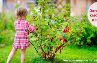 Загадки про смородину для детей