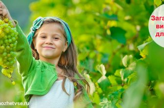 Загадки про виноград для детей