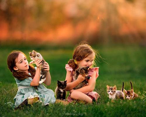 Загадки про котёнка с ответами