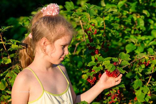 Загадки про смородину для детей 5-7 лет