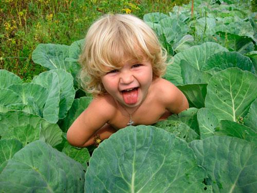 Загадки про капусту с ответами для детей