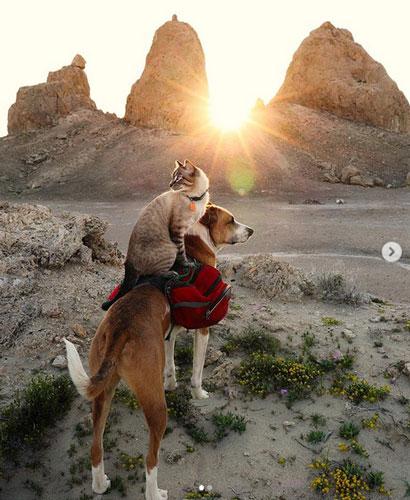 Кот Балу и собака Генри 8