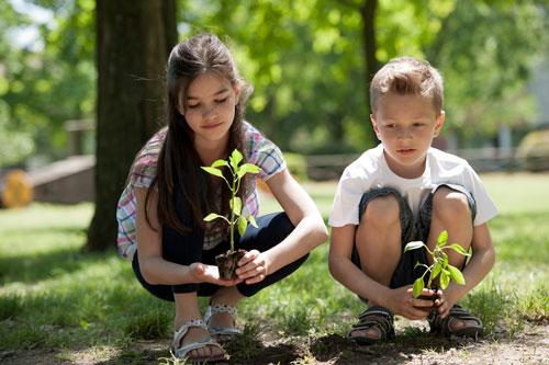 Загадки про дерево для детей с ответами