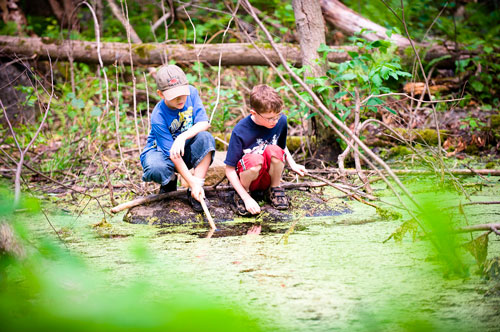 Загадки про болото для детей с ответами