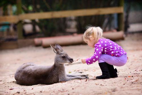Загадки про зоопарк для детей с ответами