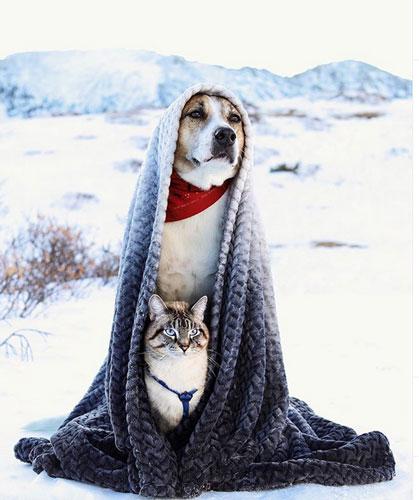 Кот Балу и собака Генри 1