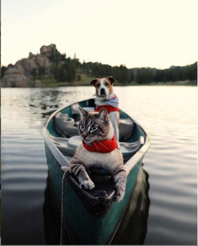 Кот Балу и собака Генри